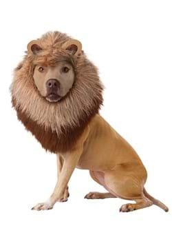 Lion Pet Costume  sc 1 st  Halloween Costumes UK & Pet Costumes - Cat Dog Pet Halloween Costume