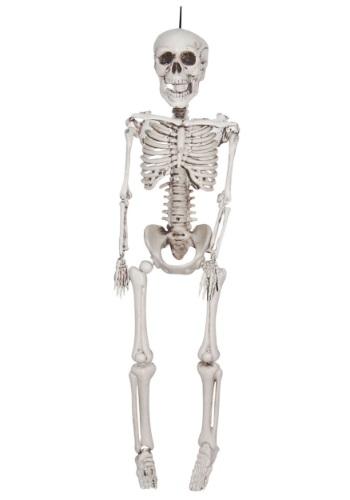 20 Inch Plastic Realistic Skeleton