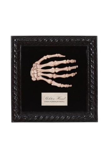 Lab Specimen Skeleton Hand