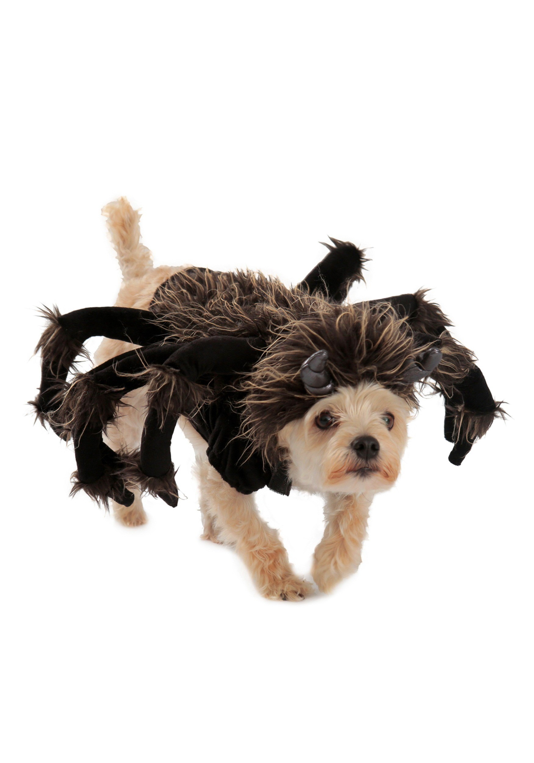 sc 1 st  Halloween Costumes UK & Tarantula Dog Costume