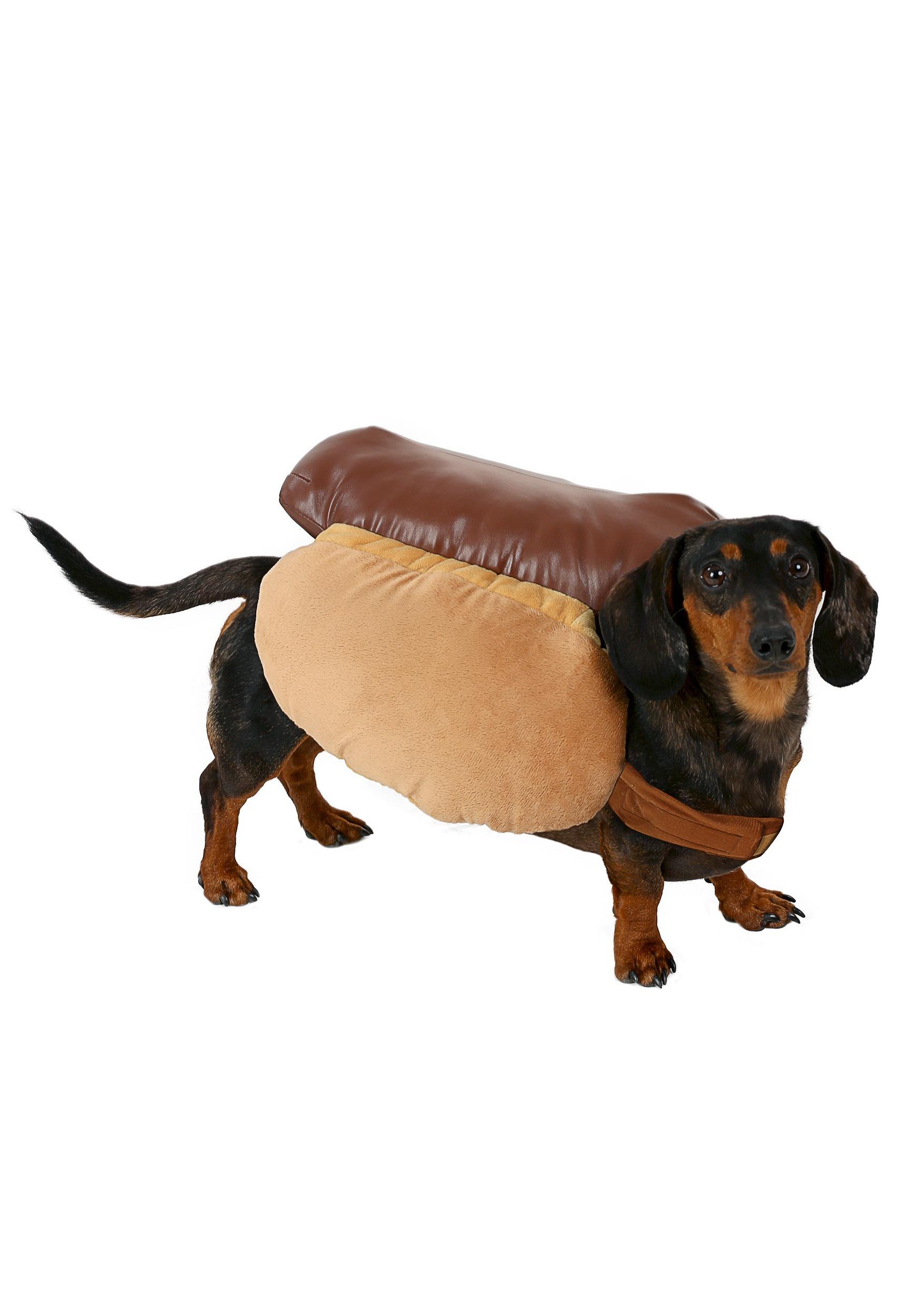 Sausage Dog In Hot Dog Costume