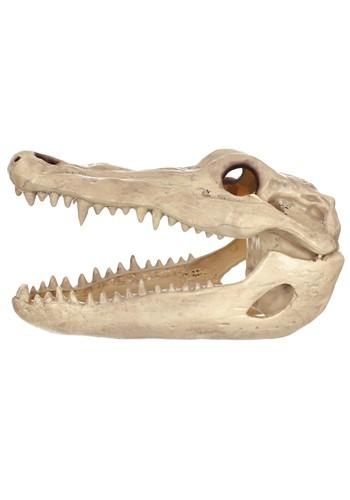"""13.5"""" Alligator Head Skeleton Prop"""